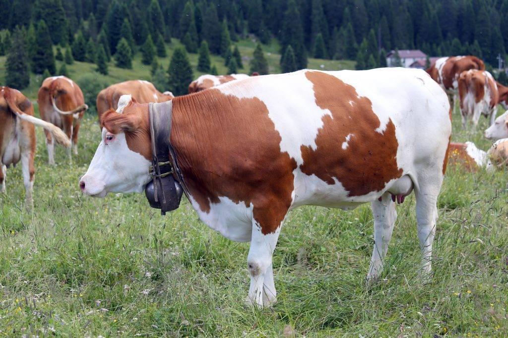 Болезни суставов домашних животных лечение список препаратов гиалуроновой кислоты для суставов