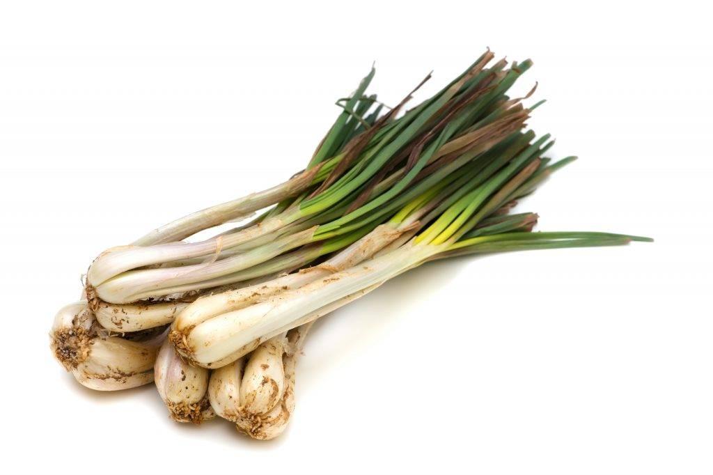 Китайский лук лечебные свойства и противопоказания - Индийский лук