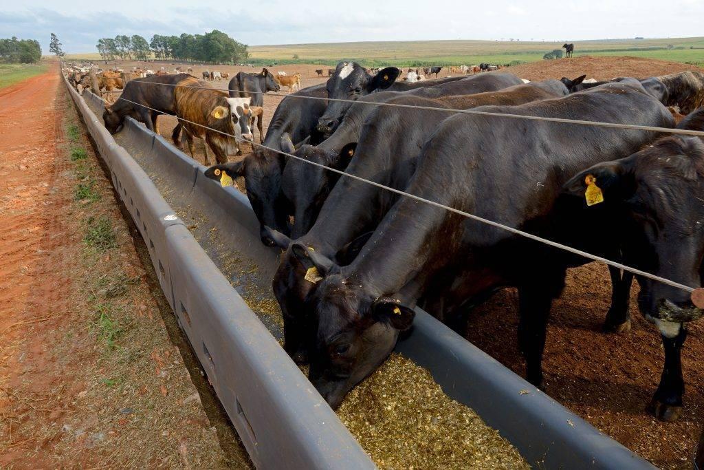хризантему можно кормушка для коровы своими руками фото оставил размораживаться
