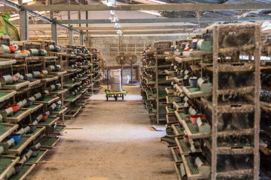 Бизнес план перепелиная ферма бизнес идея пилинг