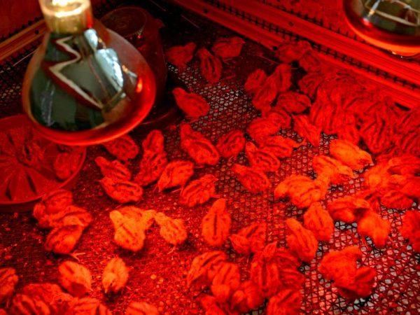 красная лампа для обогрева курятника отзывы
