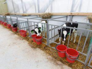 Как построить сарай для быков