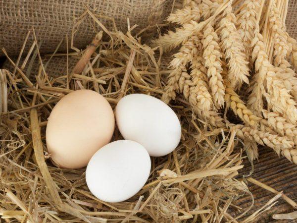 Куры несут яйца без скорлупы