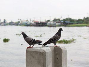 Отпугиватель голубей своими руками