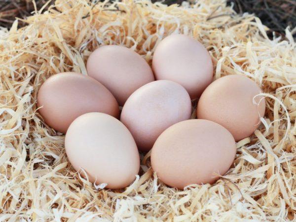 Витамины для кур несушек