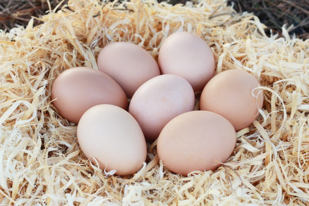 Витамины для кур-несушек для яйценоскости зимой и летом