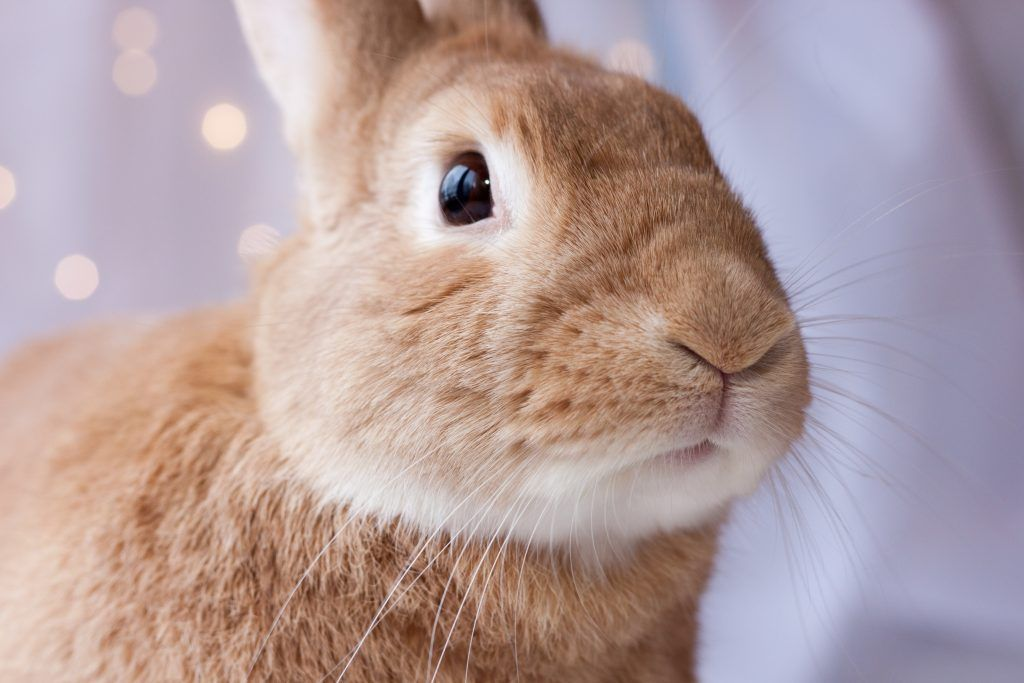 Симптомы основных болезней глаз у кроликов