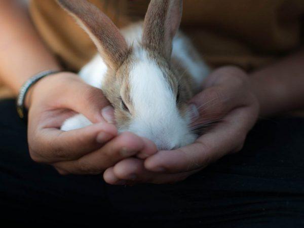 Перечень симптомов болезней кроликов