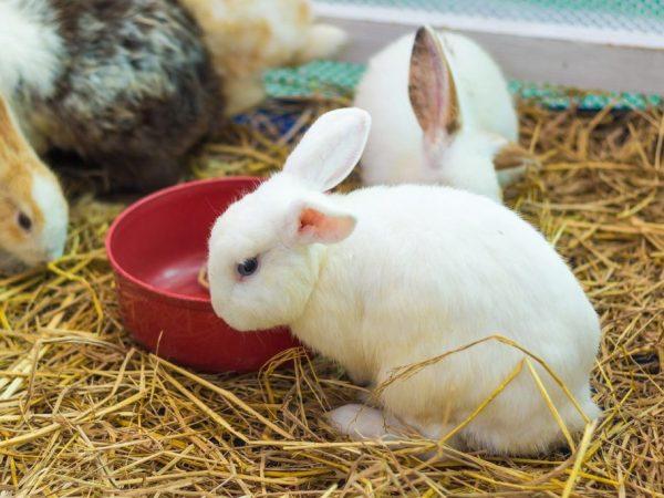 Как кормить маленьких крольчат