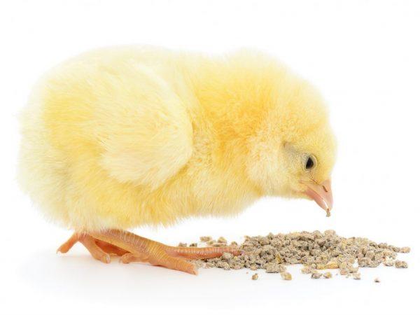 Чем кормить цыплят с первых дней жизни