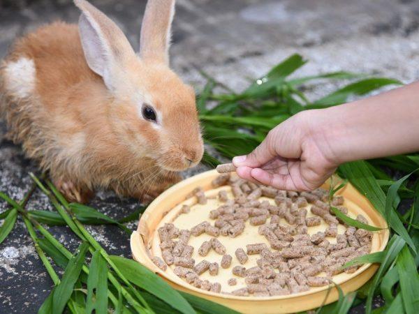 Концентрированная смесь для откармливания кроликов
