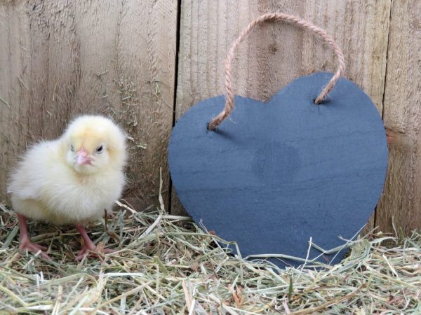 Чем кормить суточных цыплятЧем кормить суточных цыплят