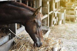 Что едят лошади