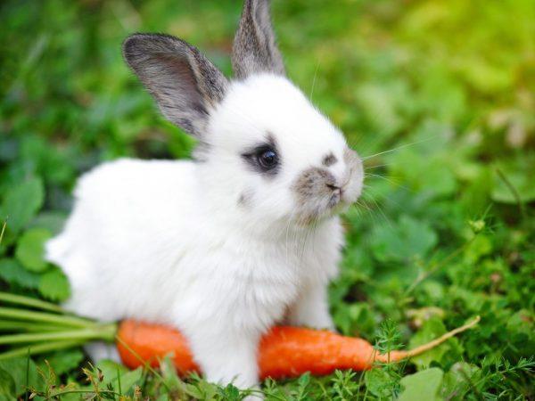 Что можно давать кролику