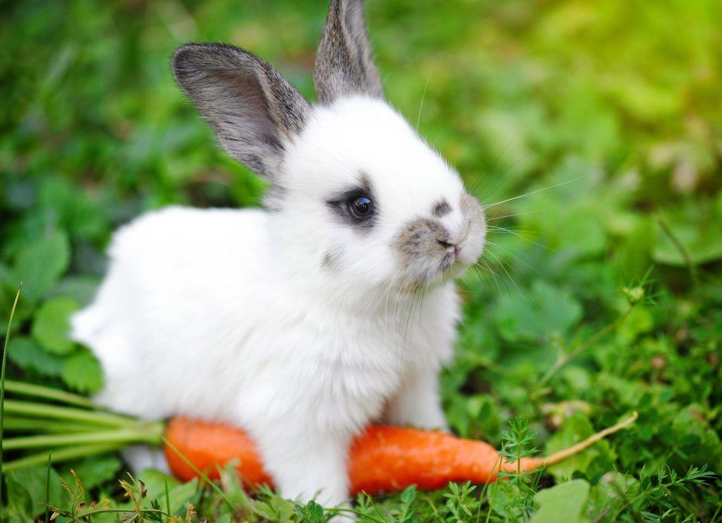 вариант живые картинки про кроликов уфимского модельного