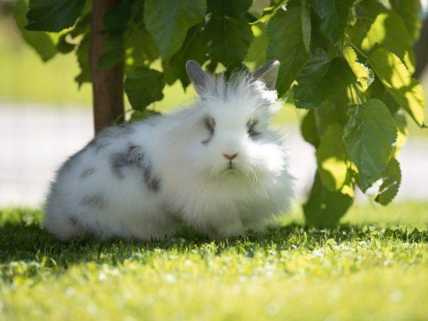 Цвет и запах мочи у кролика