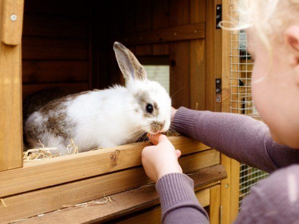 Чем дезинфицировать клетки кроликов