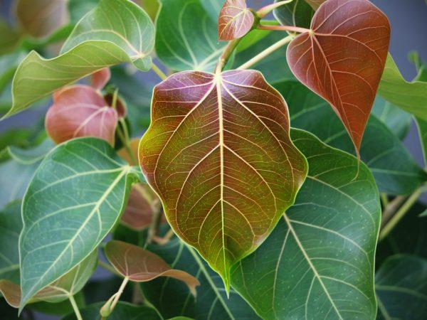 Оберегайте растение от прямых лучей солнца