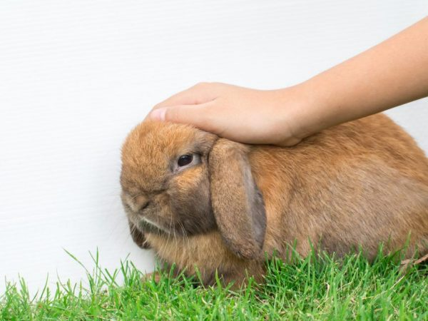 Неинфекционные заболевания кроликов