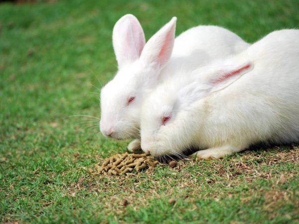 Питание кроликов Хиколь