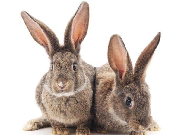 Необычные способности кроликов