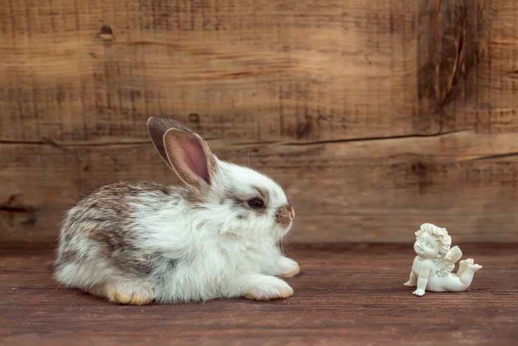 Сонник Кролик 😴, к чему снится Кролик женщине 💤, что означает увидеть Кролика во сне