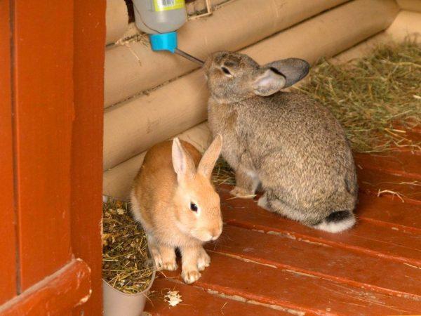 Составление меню для кроликов