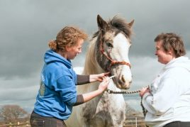 Как управлять лошадью