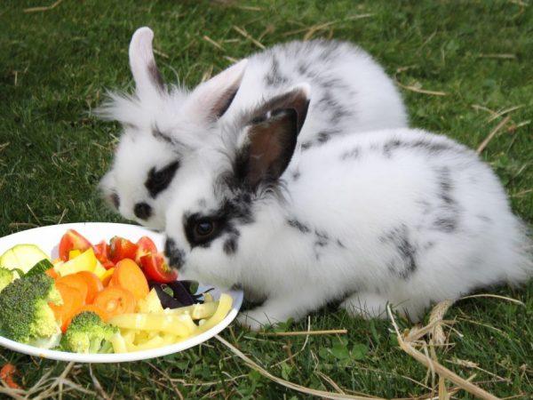 Овощи и фрукты для кролика