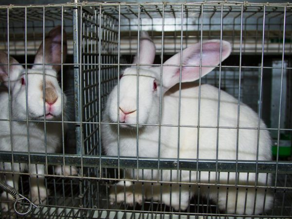 Клетка для кроликов своими руками