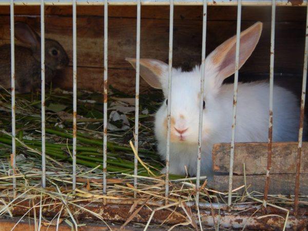 Мини-ферма Михайлова для кроликов