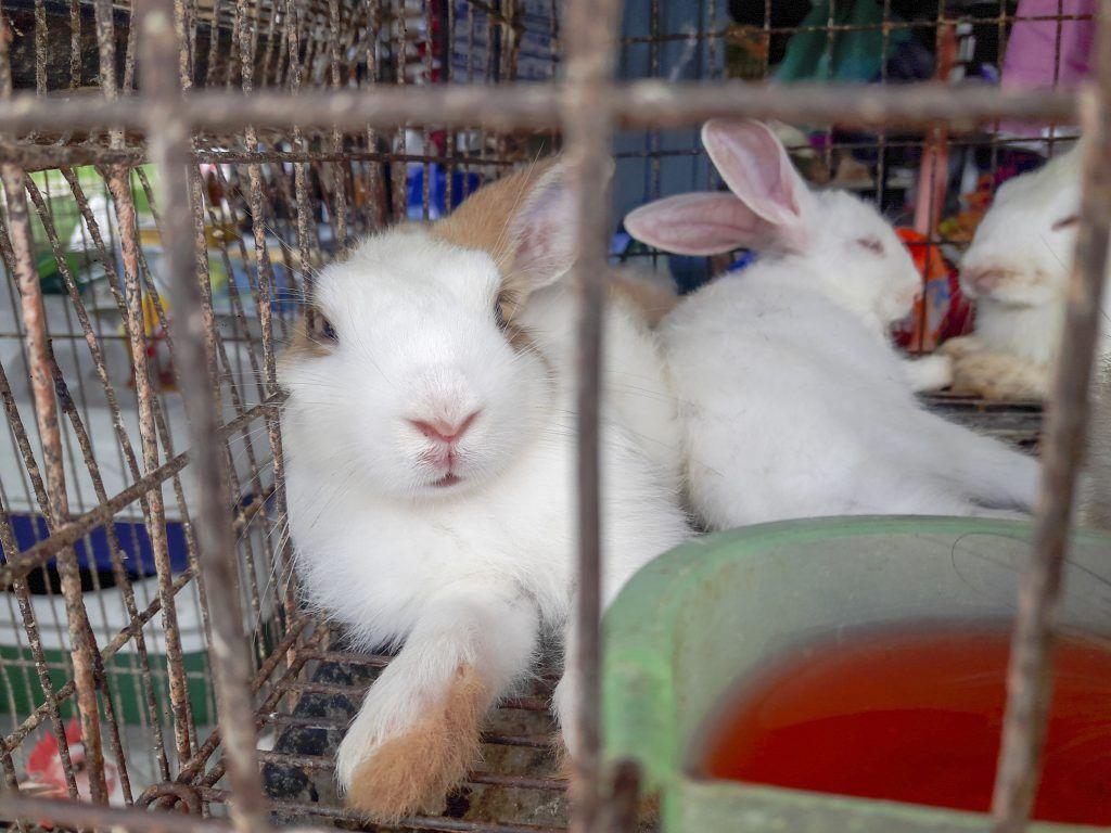 Как сделать клетки для кроликов Золотухина: чертежи, размеры