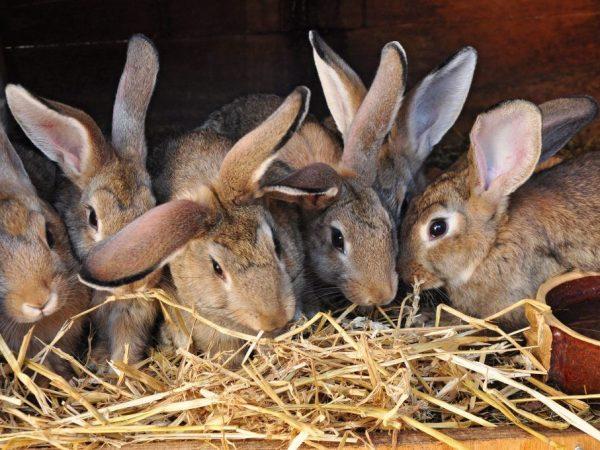 Когда крольчата выходят из гнезда