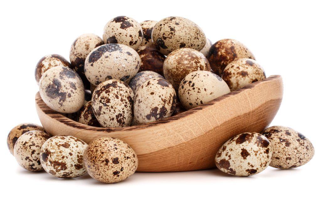 Как несутся перепела и лучшие яичные породы