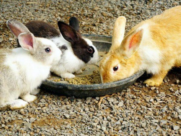 Когда отсаживать крольчат от мамы