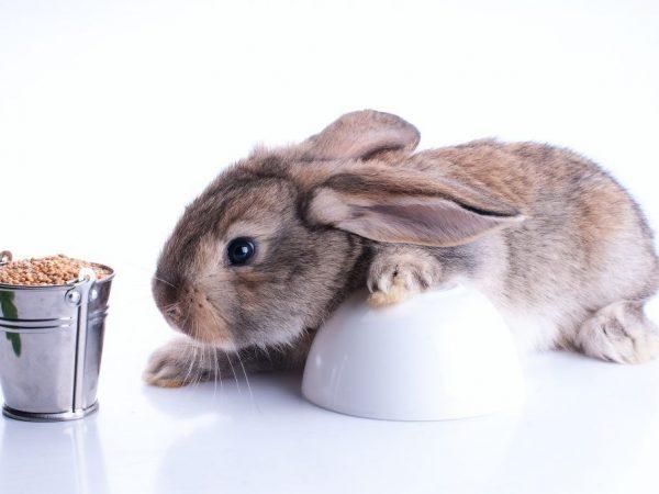особенности кормления кроликов