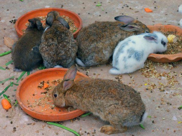 Откорм молодых кроликов