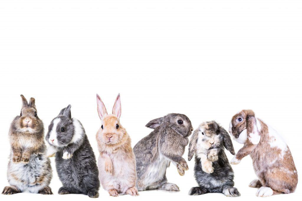 Разведение кроликов для начинающих в домашних реалиях советы