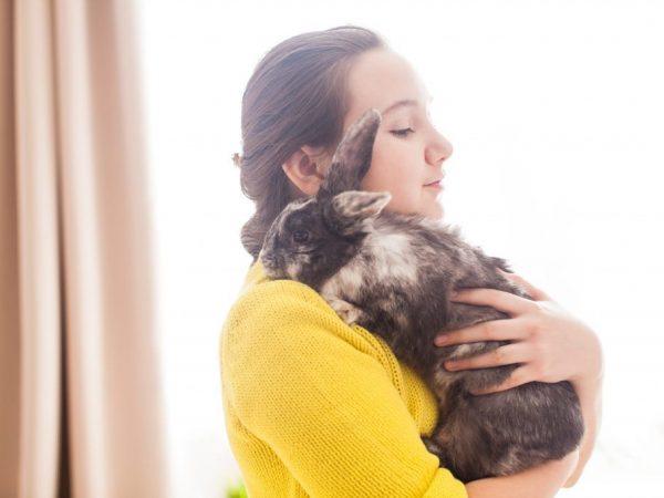 Применение лекарств для кроликов