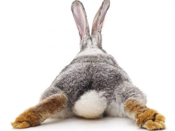 Мокрая задница у кролика