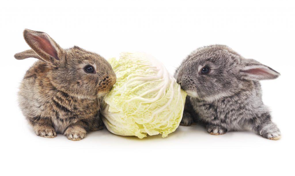 Можно ли кроликам цветную капусту