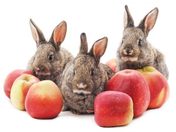 Спелые яблоки для кроликов