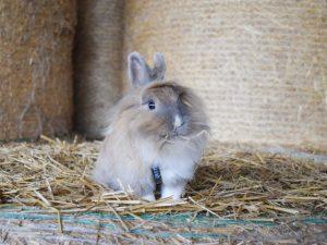Лебеда для кроликов