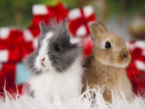 Можно ли кроликам одуванчики
