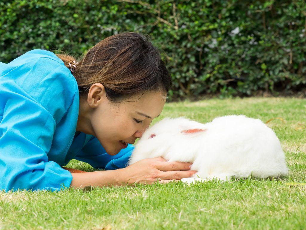 Правила содержания белого и красного кроликов