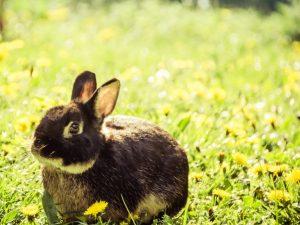 Отказали задние или передние лапы у кролика