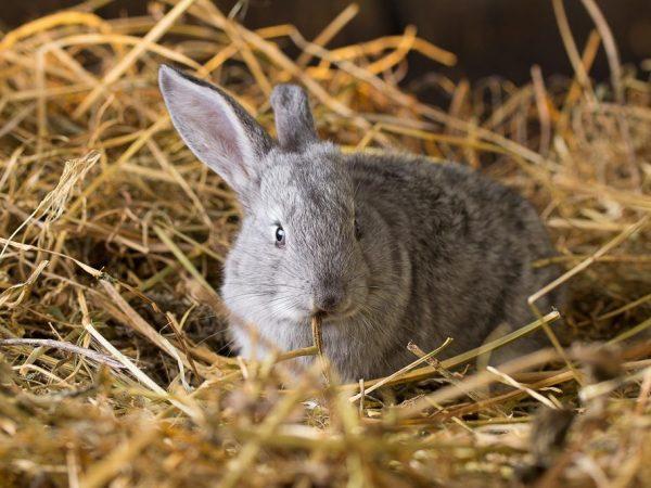 Почему крольчиха отталкивает и разбрасывает крольчат