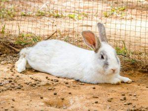 Сильно ли кусают кролики