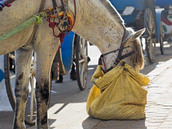Подкормки для лошадей