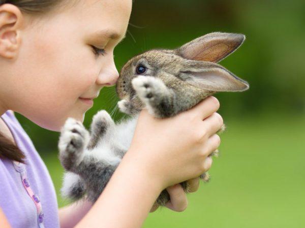 Уход за декоративными кролями
